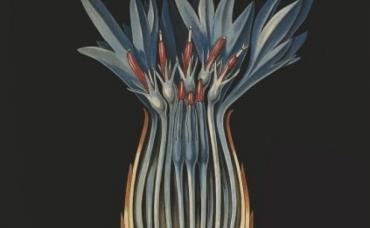augalu-parodos-afisa_5581-fd7dfc64d626cbba94ad2dfec35bb2bd.jpg